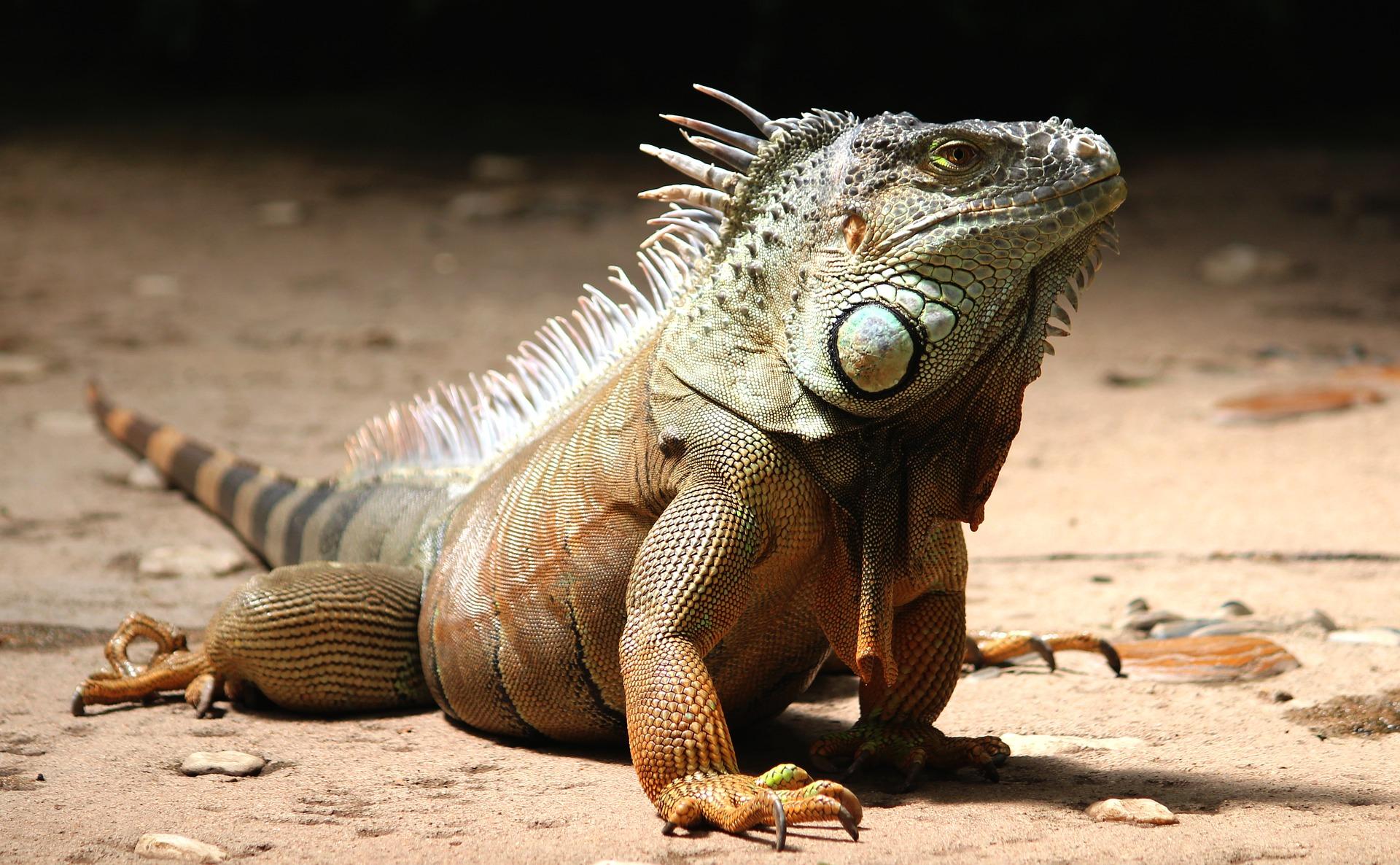 【飼育方法】一般的なトカゲの飼育に関して【爬虫類】