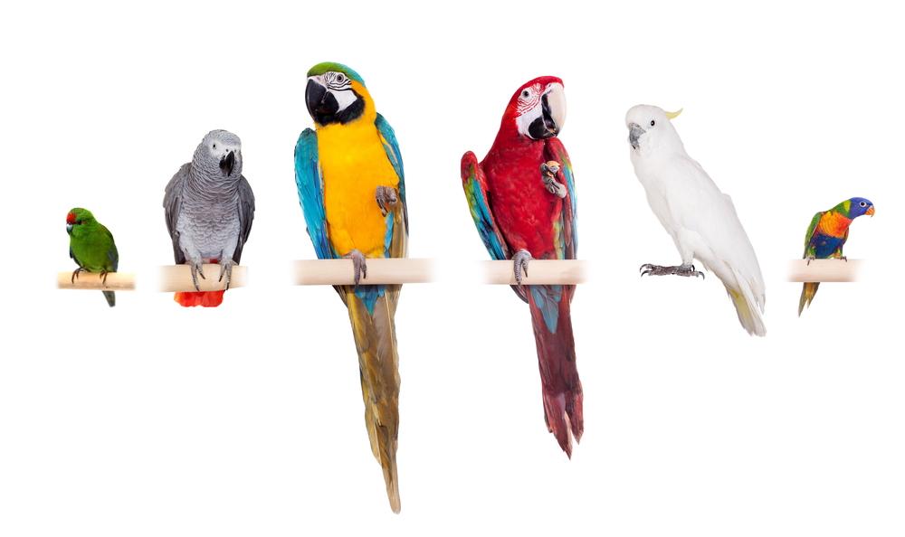 【生態について】オウム目(オウム科、インコ科)の種類【鳥類】